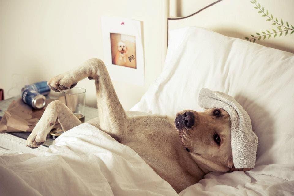 hangover hacks